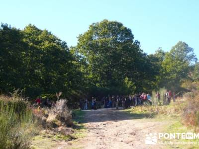 Castañar de la Sierra de San Vicente - Convento del Piélago;trekking españa;senderismo rutas